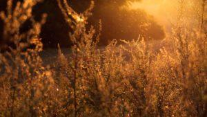 pollen allergies spring